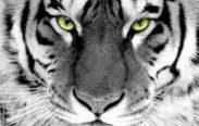Macan Sakti 3