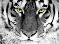 Macan Sakti 1