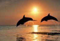 delfini 197x133 - Dolphin Rainbow Chakra Healing