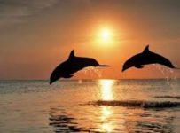 Dolphin Rainbow Chakra Healing 3