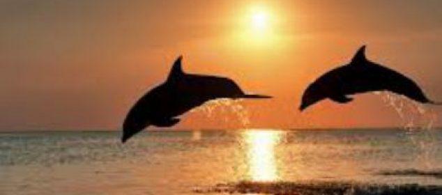 Dolphin Rainbow Chakra Healing 9