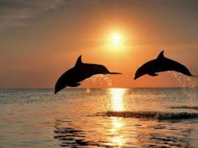 delfini - Dolphin Rainbow Chakra Healing
