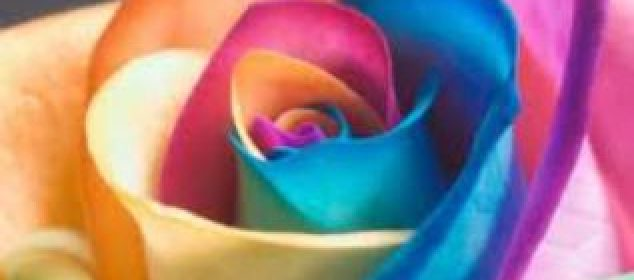 Chamaleon Rose Reiki 8