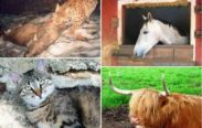animali domestici e selvatici 183x116 - Animal Protection Reiki