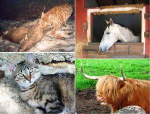 animali domestici e selvatici