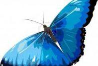 Butterfly Reiki Healing 1