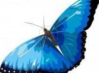Butterfly Reiki Healing 5