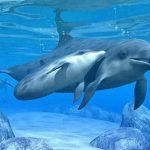 delfini2 150x150 - Past Life Reiki | Vite Passate Reiki