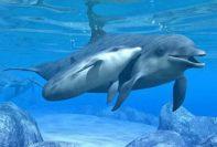 delfini2 197x133 - I Delfini di Atlantide