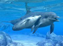 I Delfini di Atlantide 2
