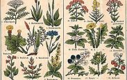 erbe medicinali 183x116 - Etheral Herbs Attunement