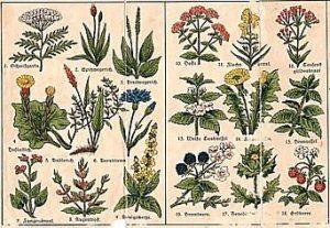 erbe medicinali 300x207 - Etheral Herbs Attunement