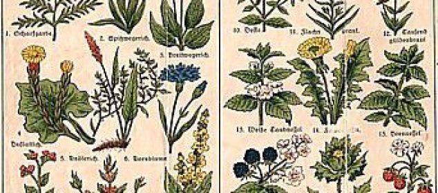 Etheral Herbs Attunement 1