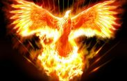 fenice di fuoco 183x116 - Fire of the Phoenix Reiki