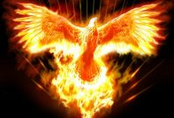 fenice di fuoco 197x133 - Fire of the Phoenix Reiki