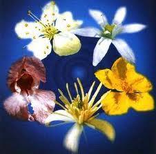 fiori di bach - Fiori eterici