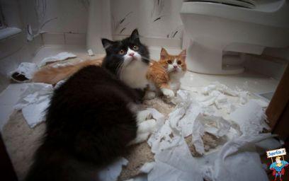 gatti con carta igienica