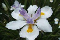 Karmic Flowers Attunement 6